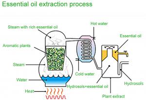 proses minyak atsiri